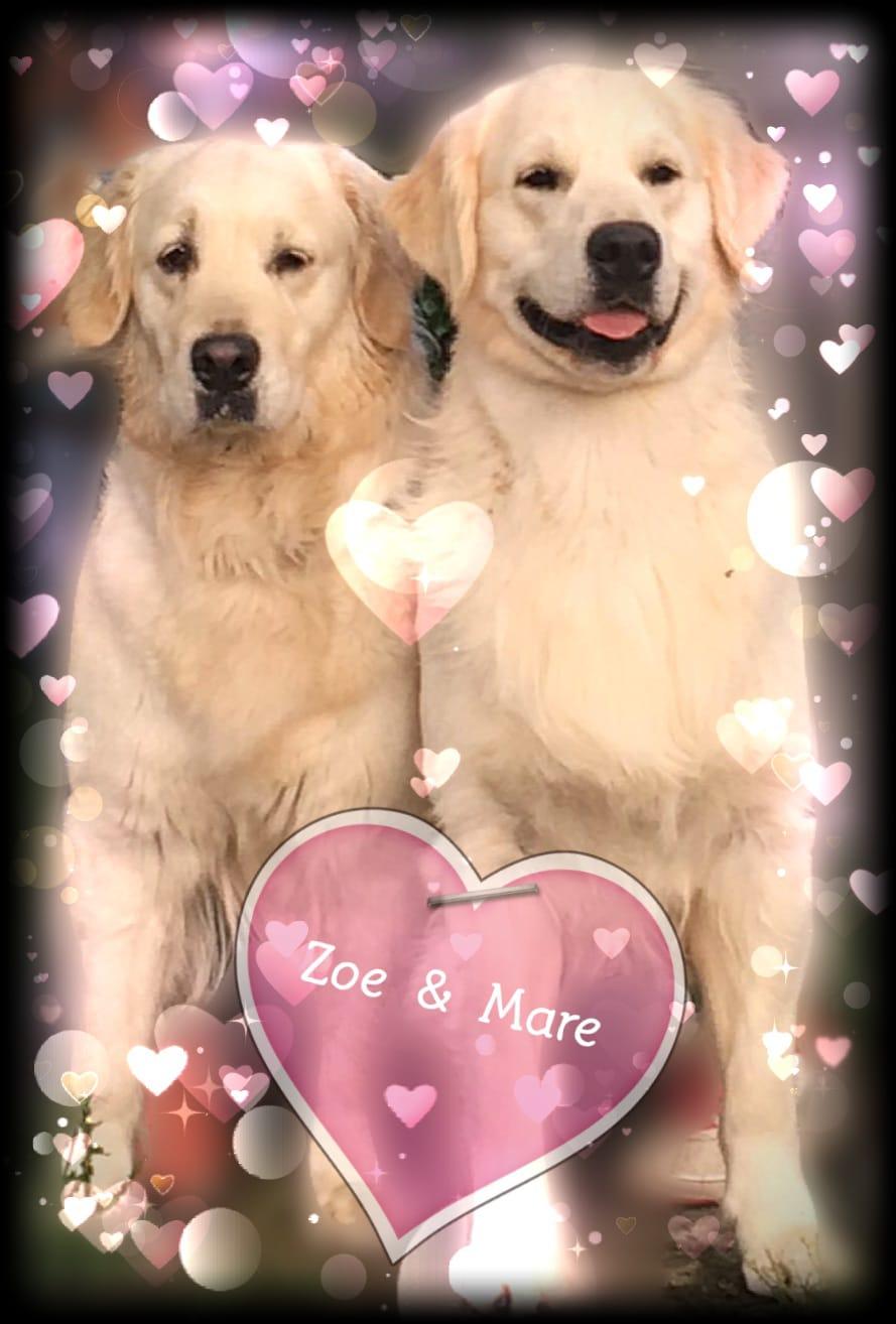 Zoe & Mare annunciano prossima cucciolata