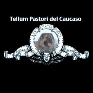 TELLUM PASTORI DEL CAUCASO