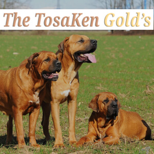 THE TOSAKEN GOLD'S