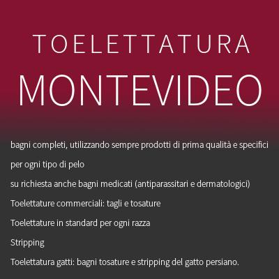 TOELETTATURA MONTEVIDEO