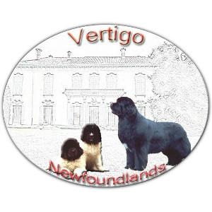 VERTIGO NEWFOUNDLANDS