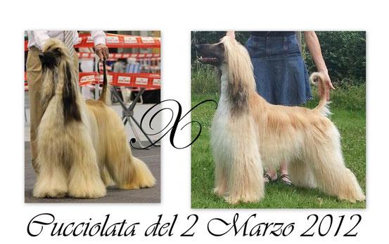 cucciolata02032012