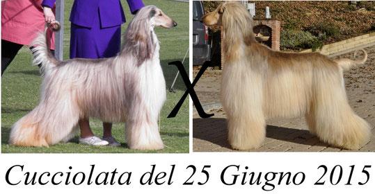 cucciolata25062015