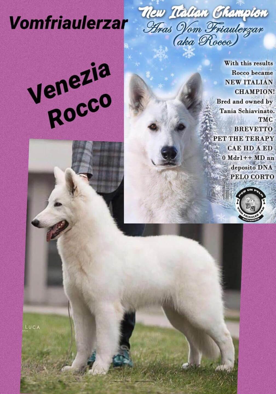 Venezia x Rocco - cucciolata in arrivo