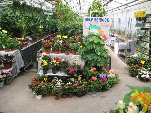 Vivaio e Garden A.Servetto:Floricoltura a Genova